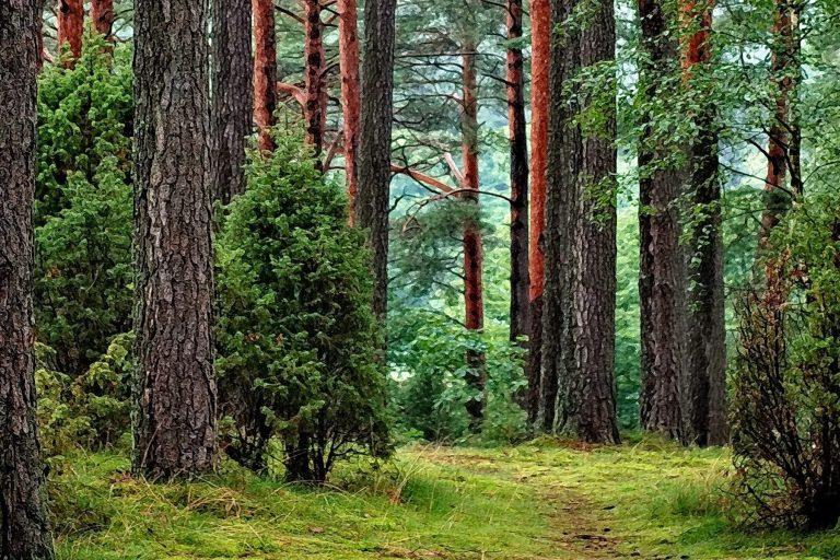 Міністерство енергетики та захисту довкілля заборонило знищення приміських лісів Києва!