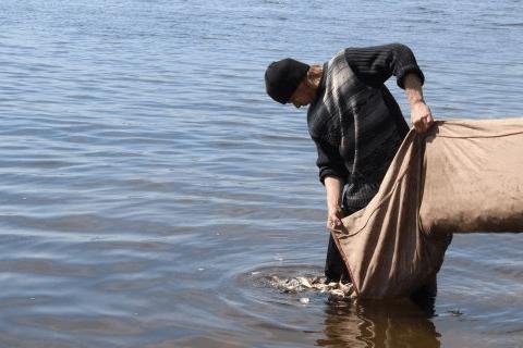 Заселення чужорідних видів риб