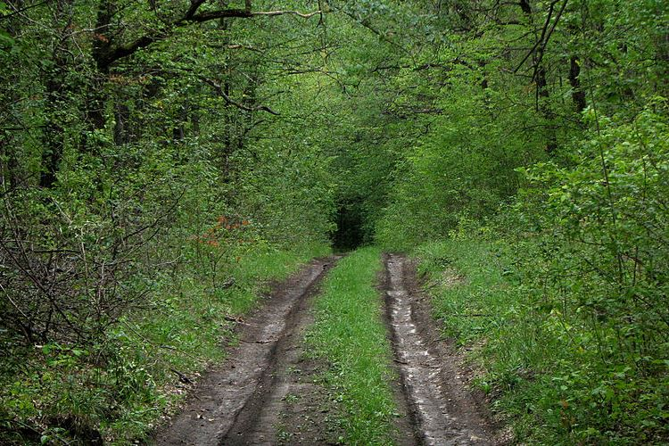 Савранський ліс