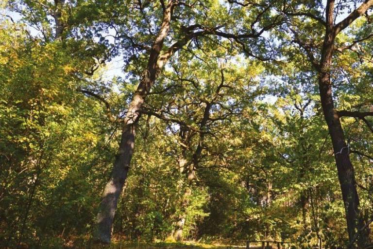 Масштабні рубки чи створення національного парку: що обере Мінекоенерго?