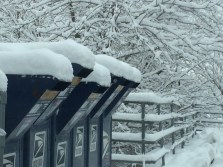 winter mailboxes