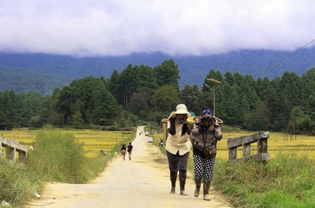 The gorgeous Ziro Valley and its vivid hues