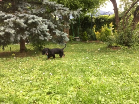wrap-up Freddy in the garden - (un)Conventional Bookviews