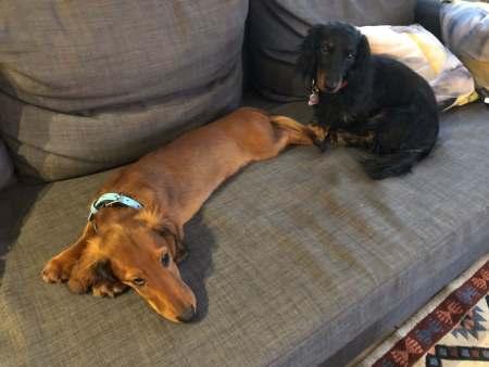 Puppies - (un)Conventional Bookviews - Weekend Wrap-up