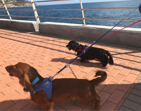 Hercules and Freddy Walking by the Sea - (un)Conventional Bookviews - Weekend Wrap-up