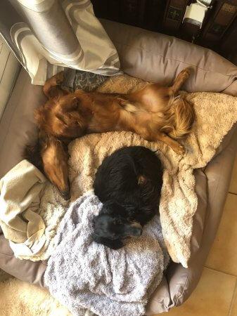 Puppy Power-nap - (un)Conventional Bookviews - Weekend Wrap-up