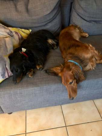 Lounging puppies - (un)Conventional Bookworms - Weekend Wrap-up