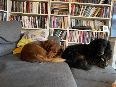 Puppies and books - (un)Conventional Bookworms - Weekend Wrap-up