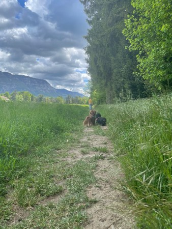 (un)Conventional Bookworms - Weekend Wrap-up:Freddy and Hercules walking in a field on a walking path between trees and a corn field. In the background, the sky is menacing with dark grey clouds, but still a speck of sunshine, and there's a mountain to the left of the picture.