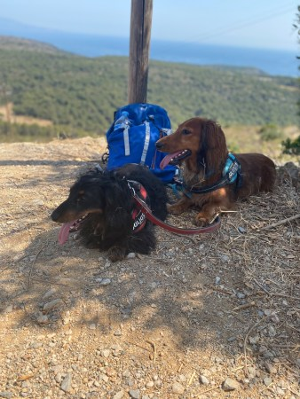 Freddy and Hercules on the top of a small mountain, with their tongues out, in the background, there are trees and the sea.
