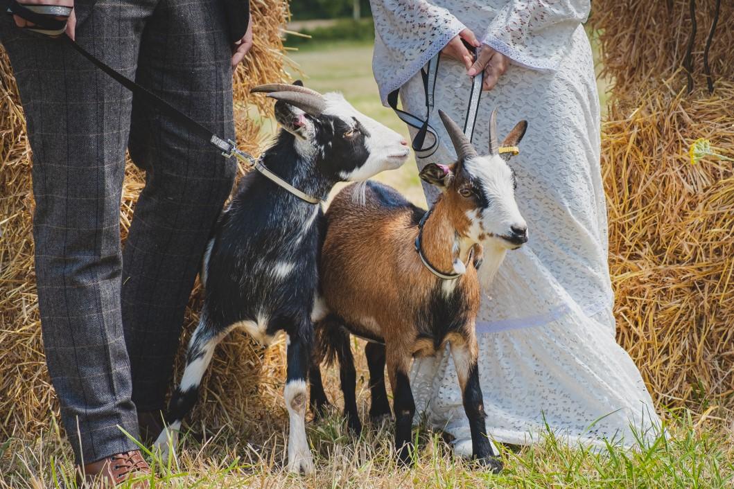 Farm-Fest    DIY Farm Wedding! ⋆ Unconventional Wedding