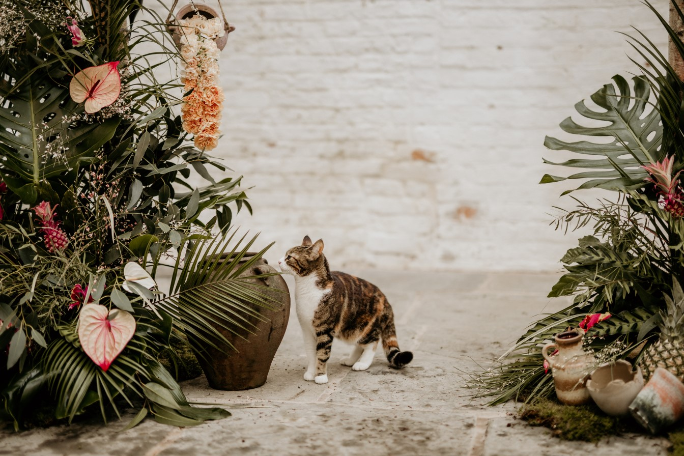 tropical opulence wedding- tropulence- twigs branch photography- unconventional wedding- cats at weddings
