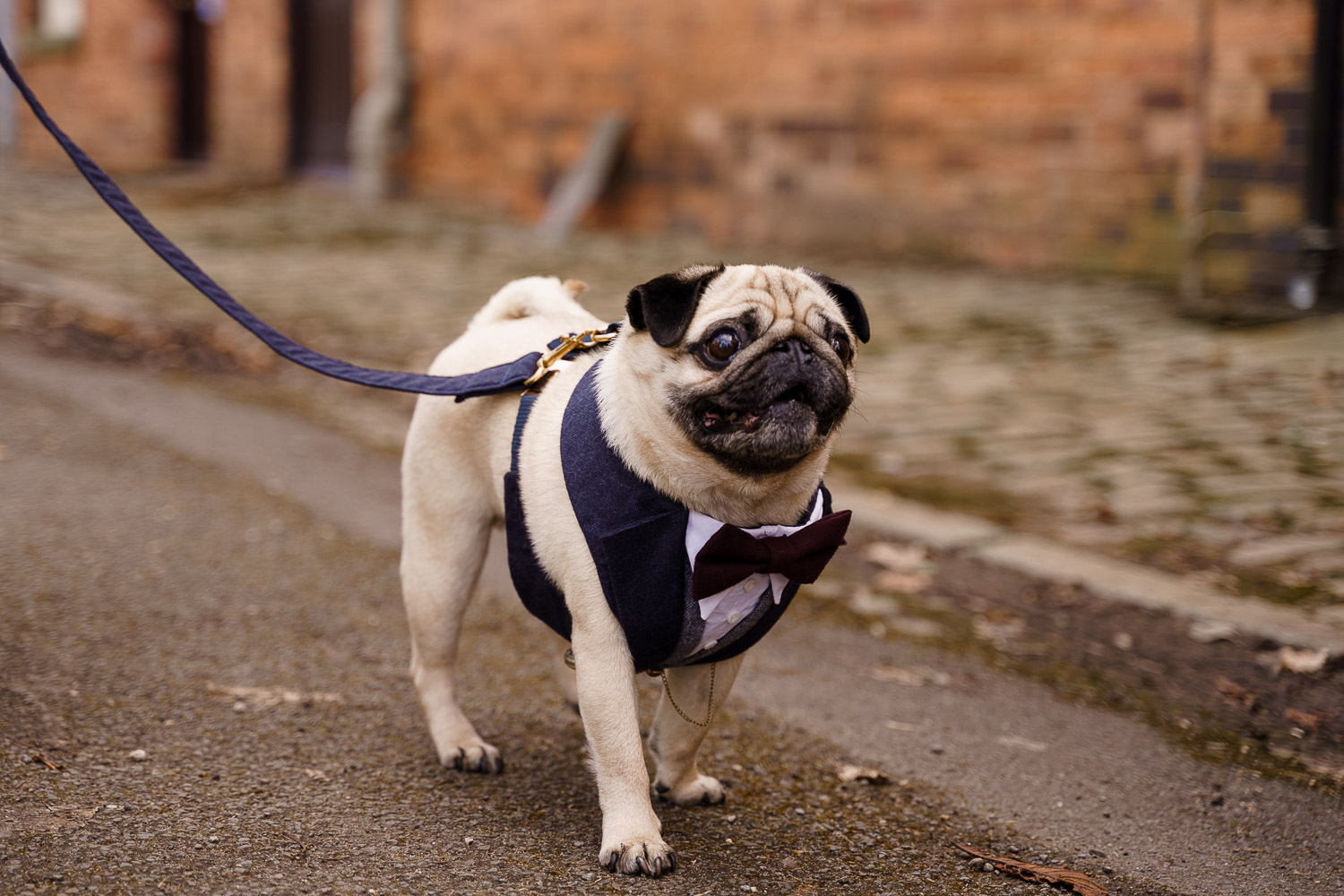 dog friendly wedding- dogs at weddings- katherine and her camera- dog wedding accessories-unconventional wedding- wedding planning advice- pets at weddings- pug in tuxedo