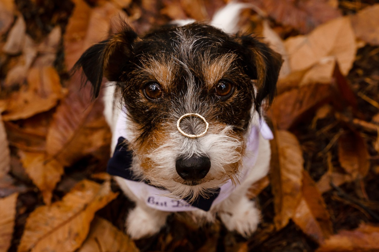 dog friendly wedding- dogs at weddings- katherine and her camera- dog wedding accessories-unconventional wedding- wedding planning advice- pets at weddings- ring bearing dog