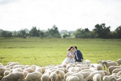 penelope jayne celebrant - harrogate celebrant - yorkshire wedding celebrant - unique wedding ceremonies- unconventional wedding supplier directory- farm wedding