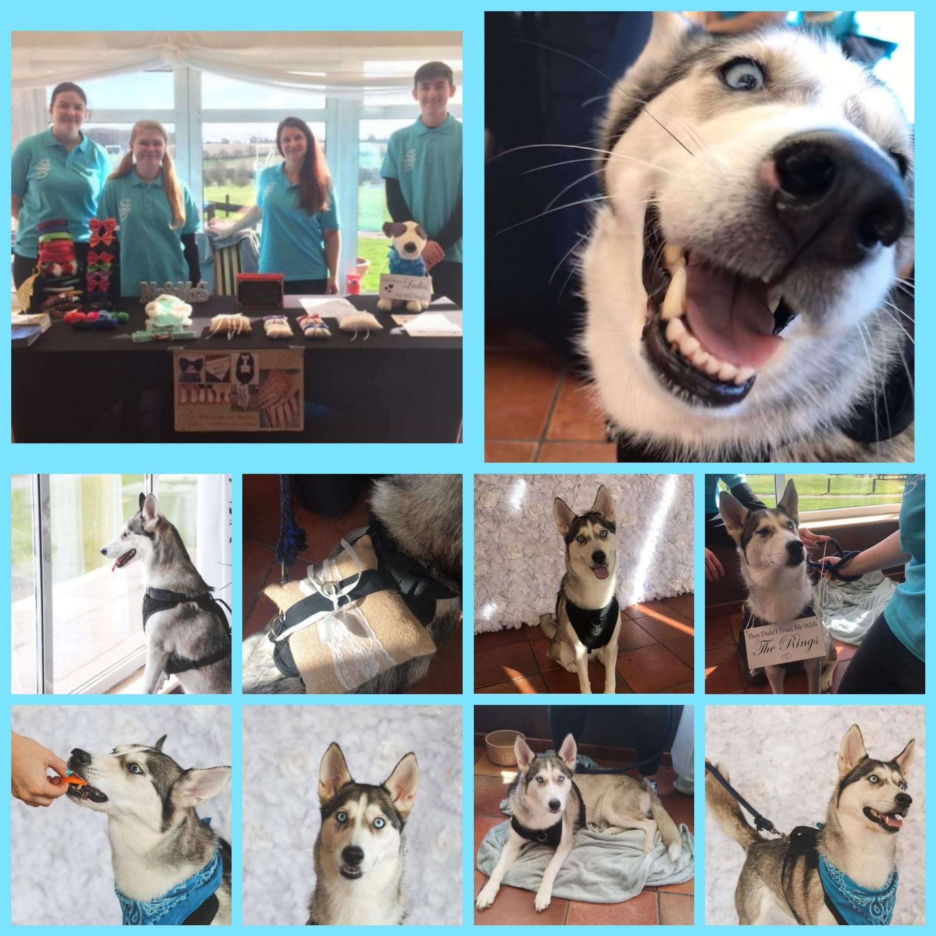 animal chaperone - wedding pet chaperone - pets at weddings - unconventional wedding - alternative wedding directory - wedding dog chaperone