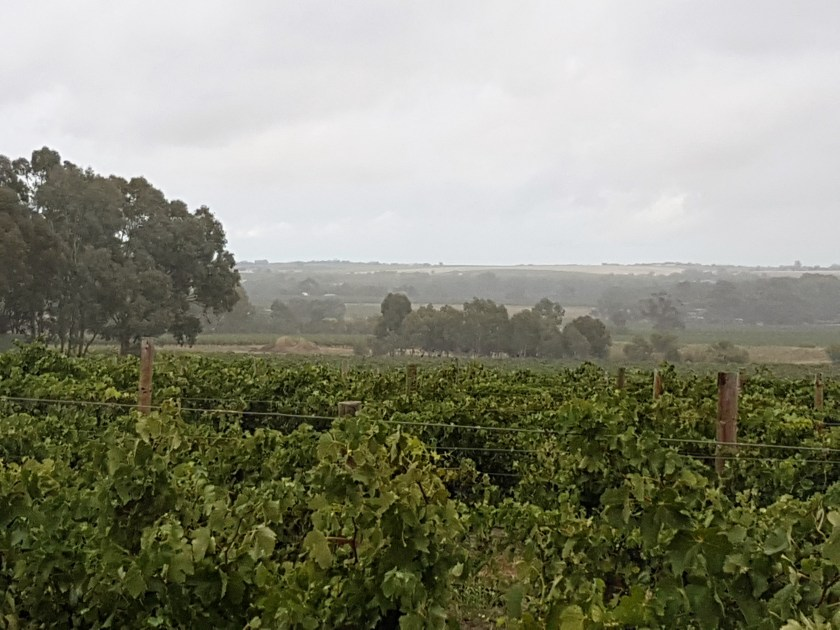 Barossa Valley - view from Light Pass Road