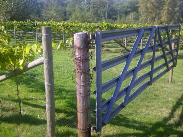 Opening up the gates to Langley Wineries