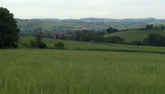 hills:vineyard