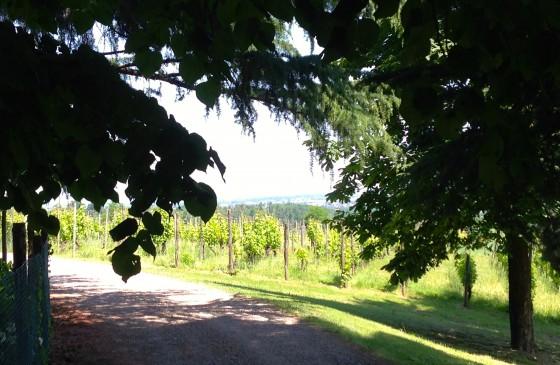 road + vines