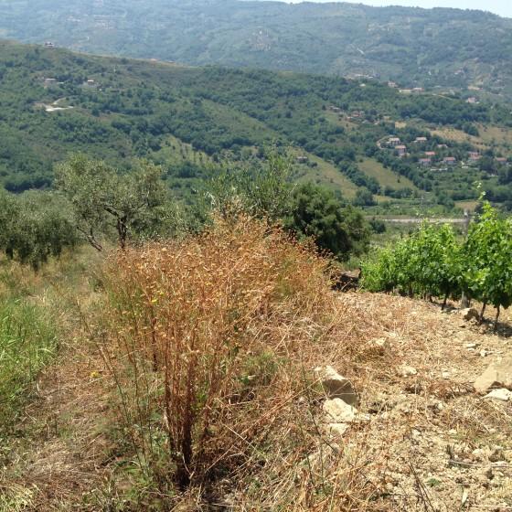 next to vines