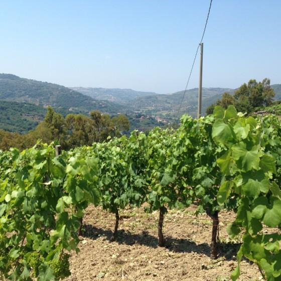 vineyard valley