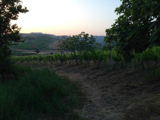 road to vineyard