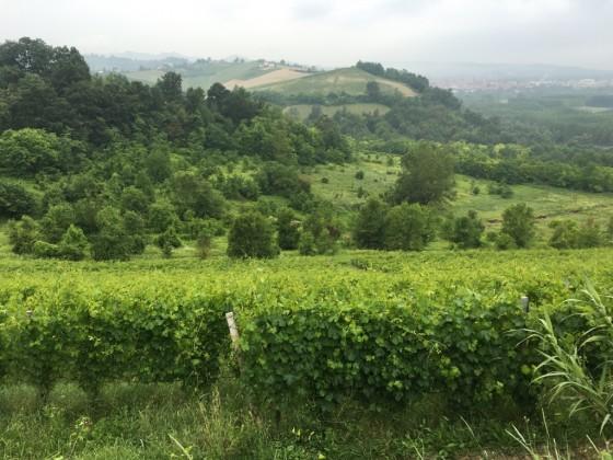 vines + bosco