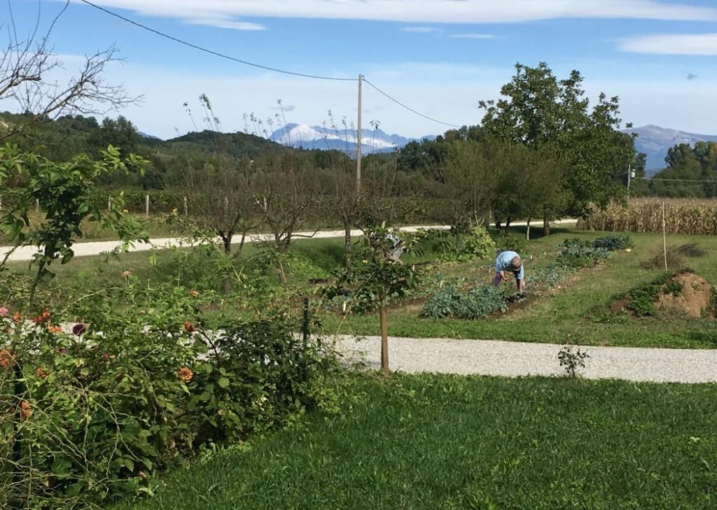 garden-working