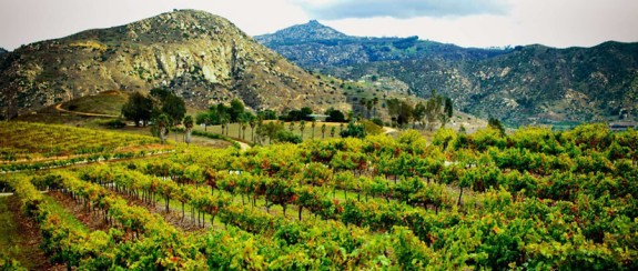 Orfila Vineyards and Winery in San Pasqual Valley vistas are stunning!