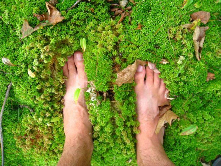 pieds herbe coups de cœur