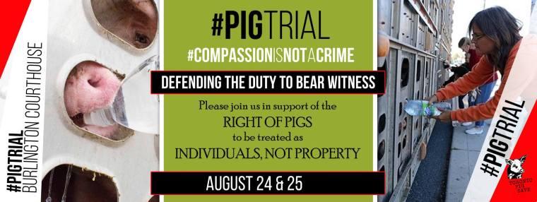 pig trial