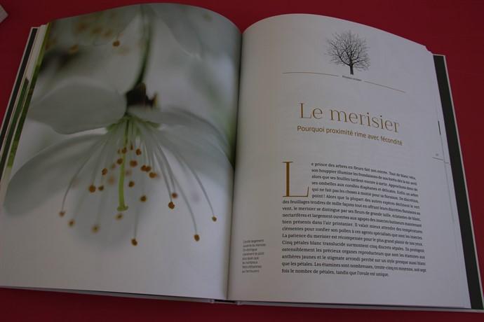 Extrait Les arbres amoureux aux éditions La Salamandre
