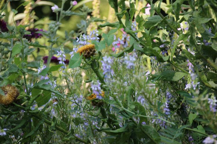 Fleurs du jardin de la Maison du vert