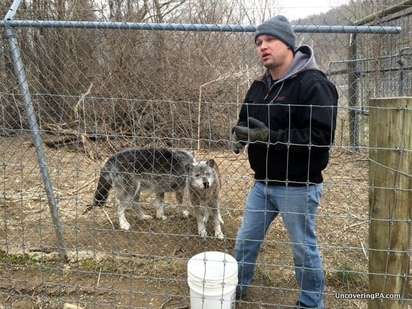 Guided tour at the Wolf Sanctuary of PA in Lancaster County, Pennsylvania