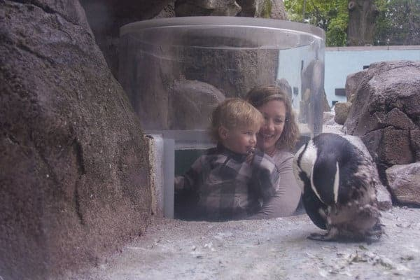 Visitors at Penguin Point in the National Aviary in Pittsburgh, Pennsylvania