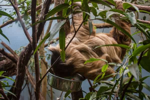 Sloth at the National Aviary in Pittsburgh, PA