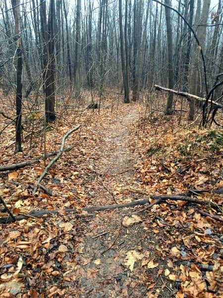 Trail to Duncan Run in State Game Lands 181