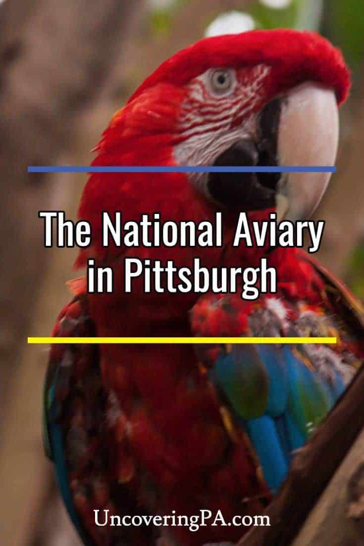 Exploring the amazing National Aviary in Pittsburgh, Pennsylvania