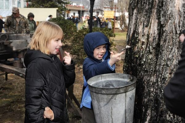 Things to do in Pennsylvania in March: PA Maple Festival