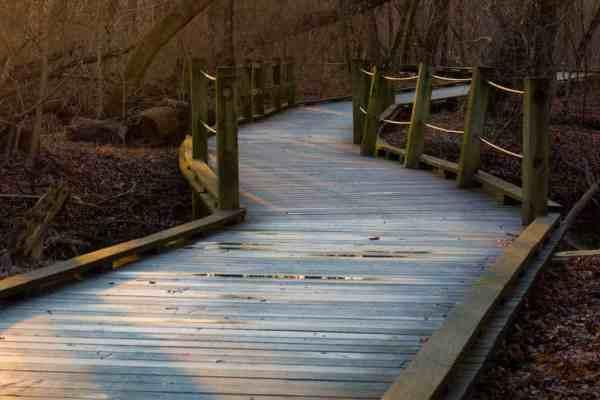 A wooden boardwalk winds its way through Harrisburg's Wildwood Park