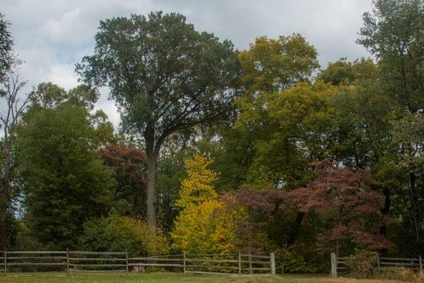 Hiking in Bartram's Garden in Philadelphia, PA