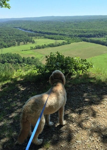 Dogs in the Delaware Water Gap: Cliff Park Trails