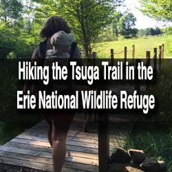 Tsuga Trail Erie National Wildlife Refuge