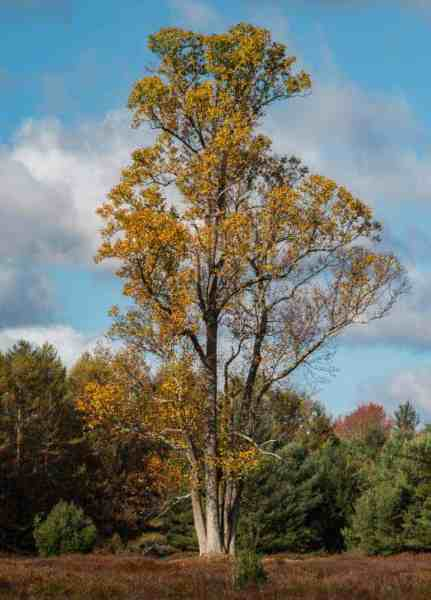 Hiking the Marion Brooks Loop Trail in the Pennsylvania Wilds