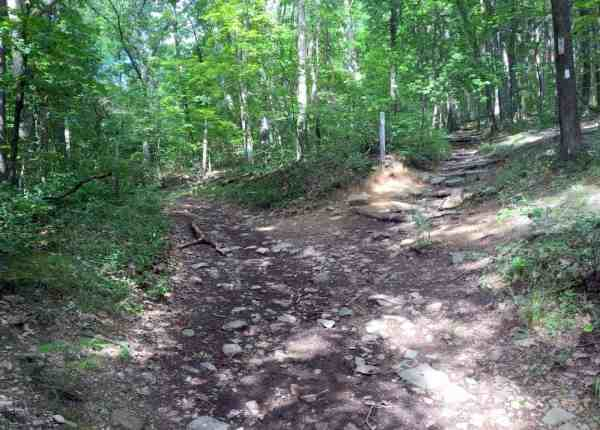 Trails on Mount Nittany in Centre County, Pennsylvania