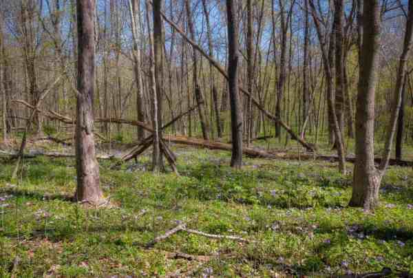 Hiking through a forest in Raccoon Creek State Park