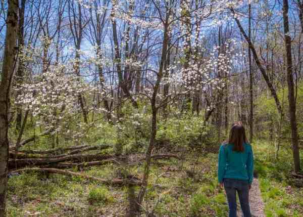 Wildflower in Raccoon Creek State Park in Beaver County, PA