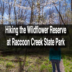Wildflowers at Raccoon Creek State Park