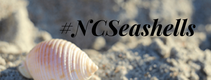 #NCSeashells